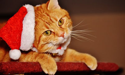 Christmas City Vet.Pets As Christmas Gifts 6 Rules To Follow Avh Union